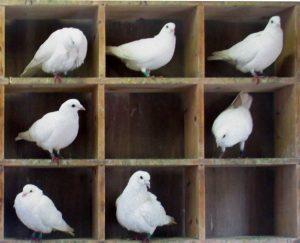 Pigeon Holes - Mark Richards Education